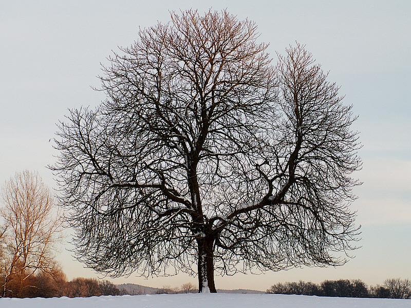 Der Baum III