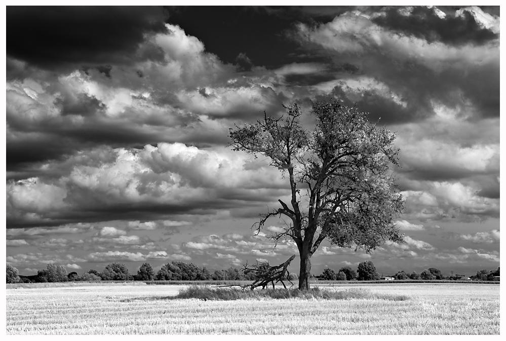 ...Der Baum im Feld...