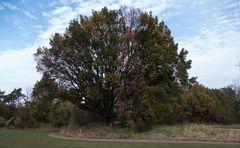 Der Baum im Herbst