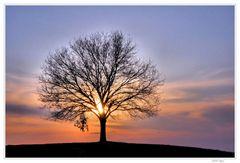 der Baum im Licht der Sonne....