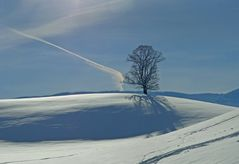 Der Baum im Morgenthal