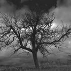 Der Baum in Grau