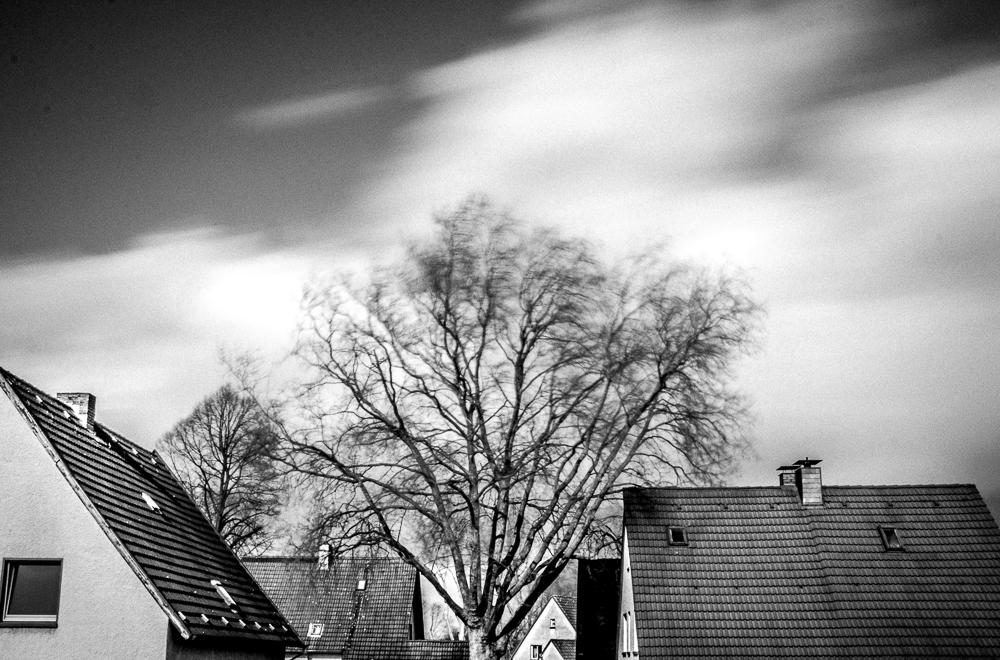 Der Baum in unserer Siedlung
