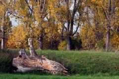 Der Baum ist tot,es lebt der Baum.