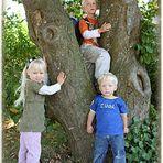 ...der Baum lebt....