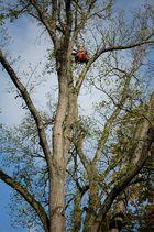 Der Baum-Mann