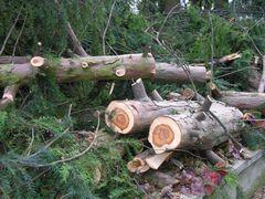 Der Baum nach dem Sturm Kyrill