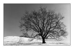 Der Baum sehnt sich nach Frühling
