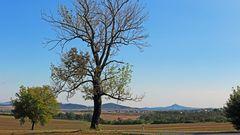 Der Baum südlich vom Böhmischen Mittelgebirge mit der...
