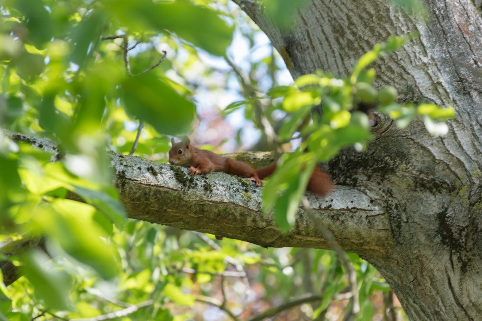 der baum und das eichhörnchen foto  bild  natur