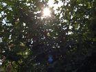 Der Baum und die Sonne.