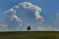 Der Baum und die Wolke