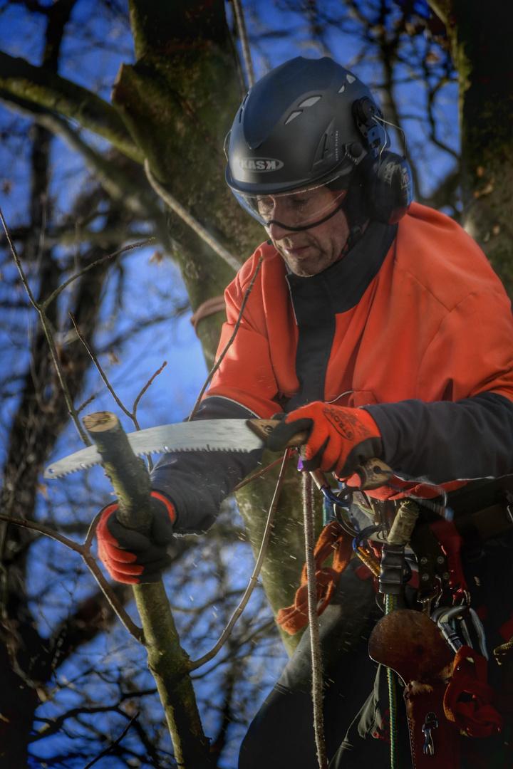 Der Baumbeschneider!