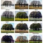 Der Baumkalender