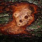 Der Baumstammschrei