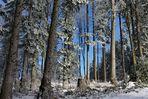Der Baumstrunk