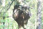 Der Baumtroll