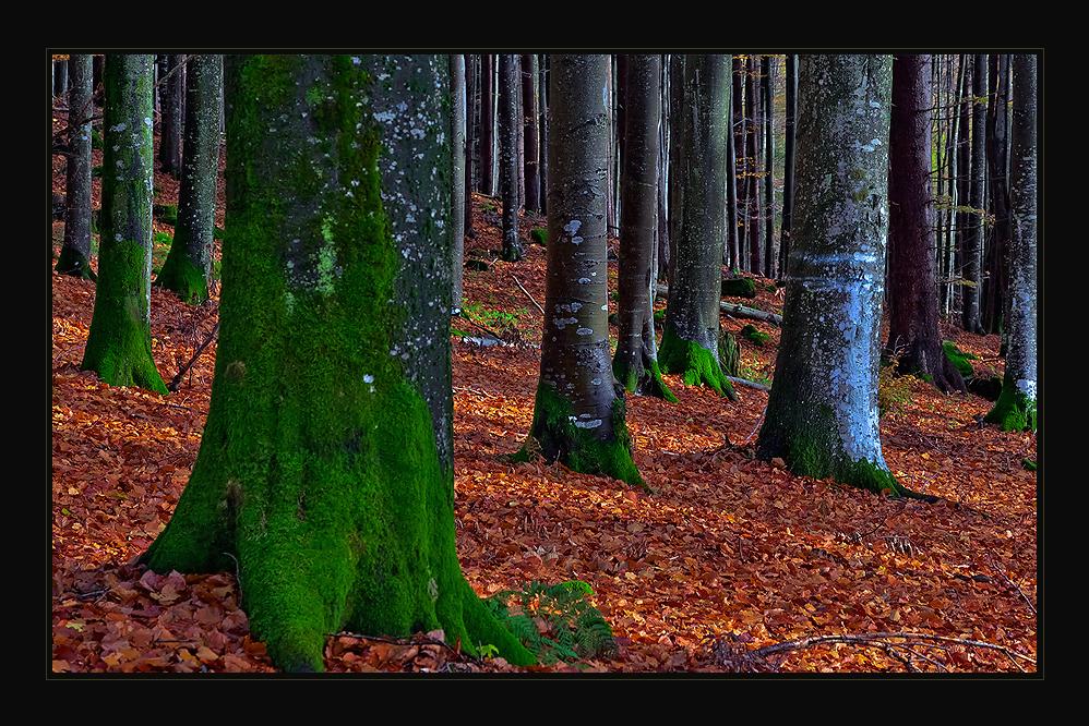 Der Bayerwald