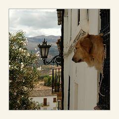 Der Beobachter...