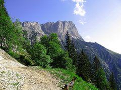Der Berchtesgadener Hochthron
