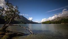 Der berühmte Baum am Silsersee