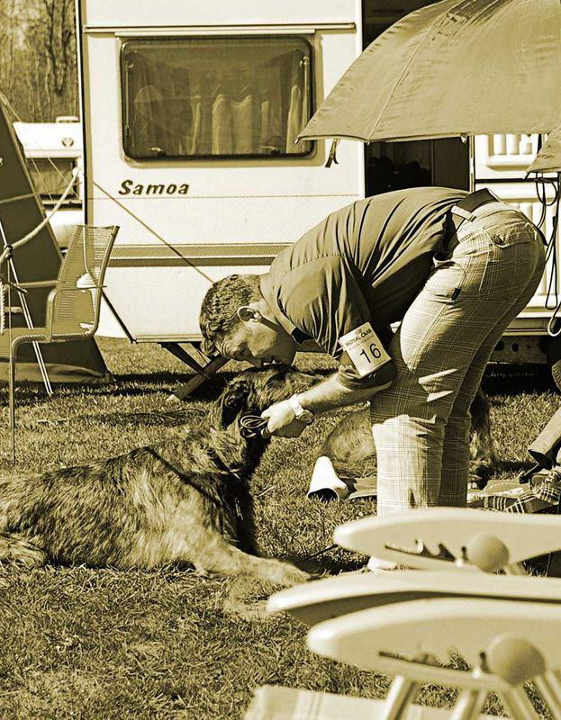 der beste Freund des Hundes