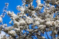 Der betörende Blütenduft