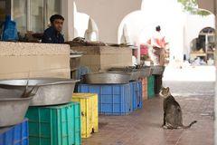 Der Bettler vom Fischmarkt in Umm al Quwain