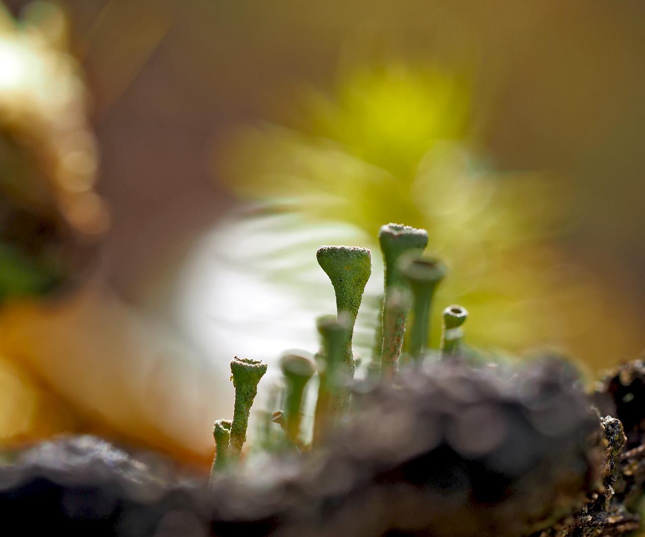 Der bezaubernde Mini-Wald! - La mystique de la forêt invisible à l'oeil nu!