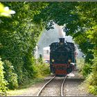 Der Blättertunnel von Burgbrohl-Weiler