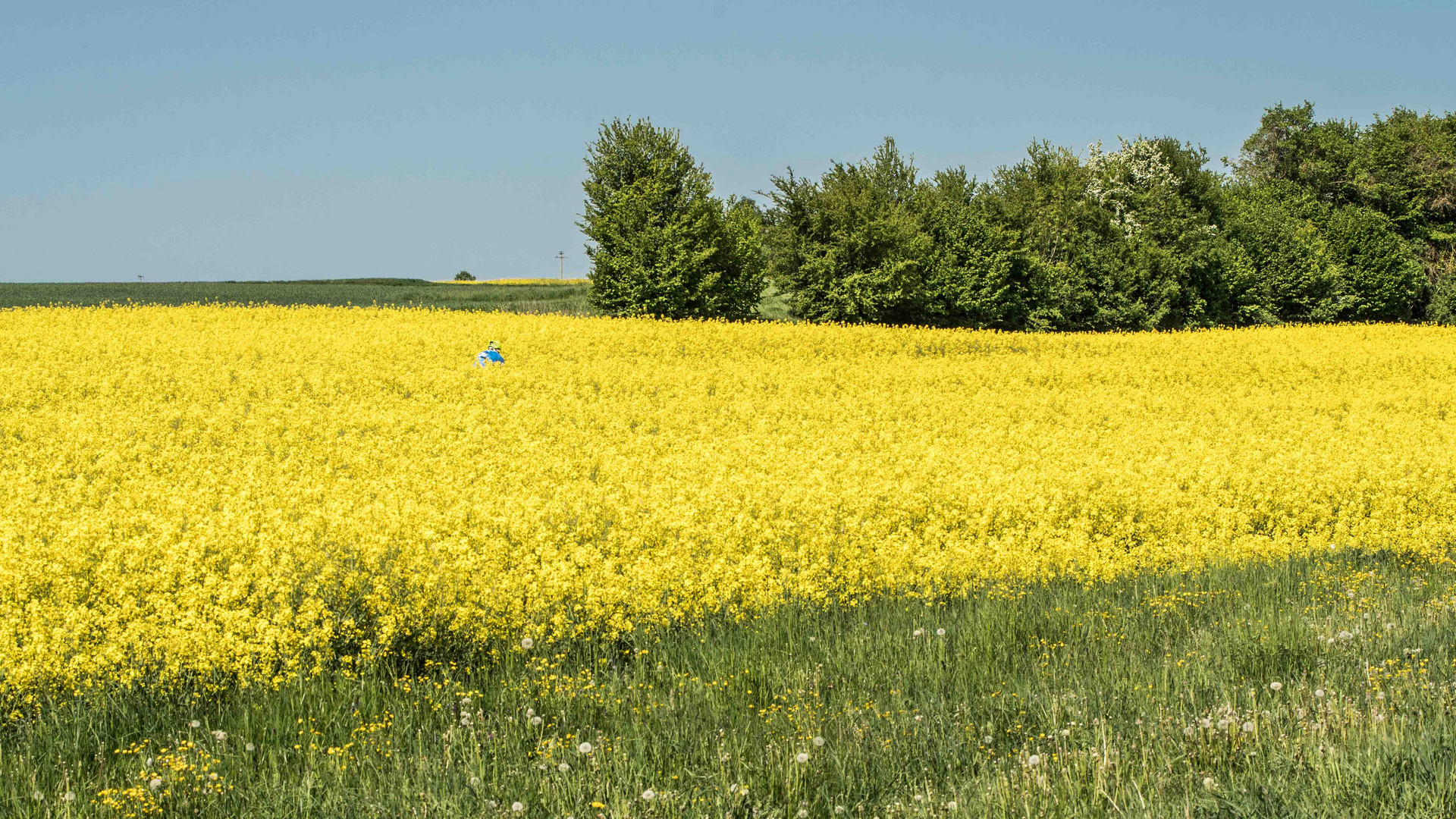 der Blaue im Gelben