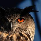 Der Blick (2)