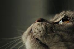 Der Blick!