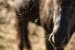 der blick der spinne