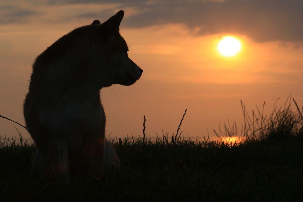 Der Blick in die Abendsonne
