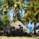 ...der Blick in die Palmen...