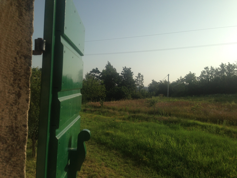 Der Blick ins Grüne am frühen Morgen