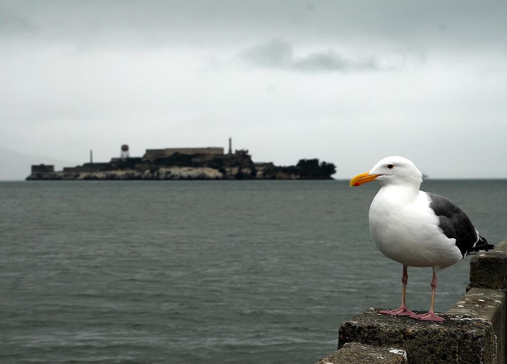 Der Blick nach Alcatraz