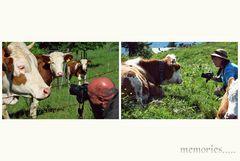 Der blöden  Kuh mutig ins Gesicht geschaut...