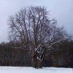 Der blühende Winter