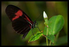 Der Blütenprüfer