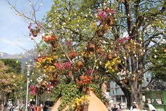 Der Blumenbaum