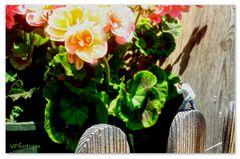 Der Blumenfotograf