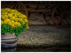 Der Blumentopf