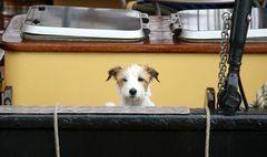 Der Bordhund