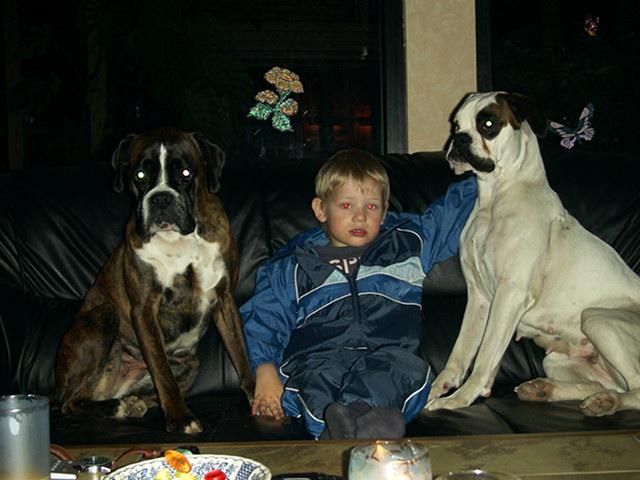 Boxer Familienhund