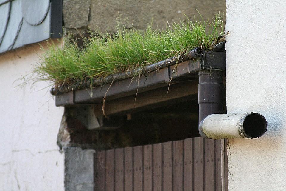 Der Braunkohletagebau schafft neue Lebensräume...
