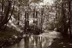 Der Brexbach im Westerwald