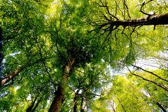 der buchenwald von Rügen im Mai