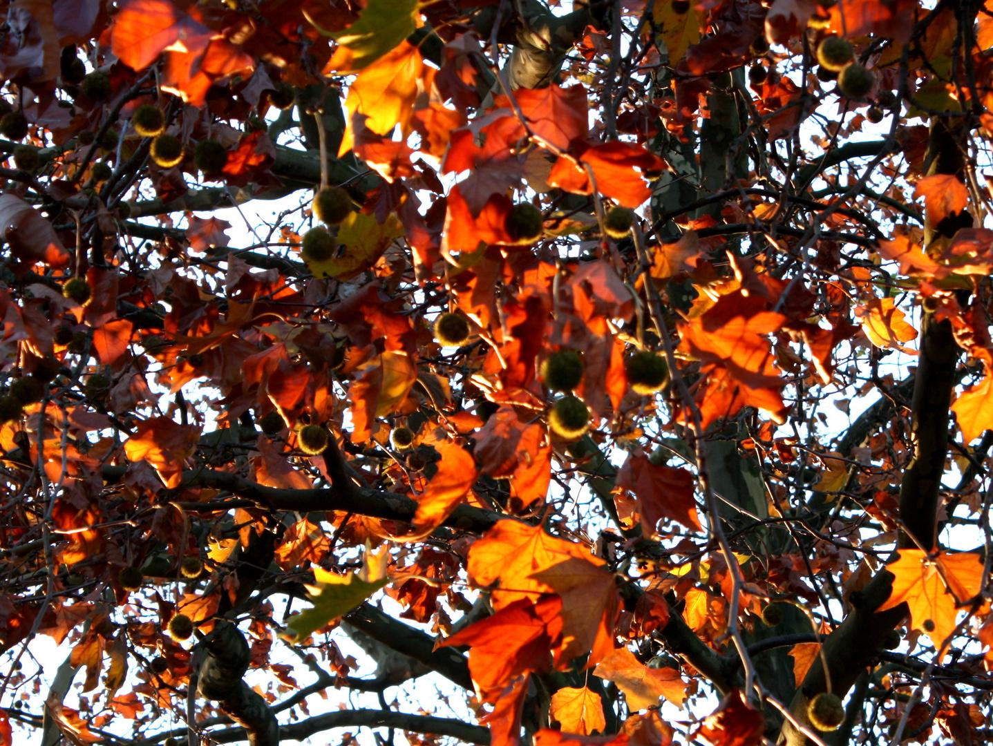 Der bunte Herbst